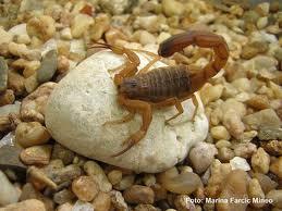 escorpião - Dedetizadora de Barata em Aldeia da Serra
