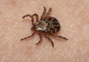 ticks pest control service 1914045 300x210 - Dedetizadora no Tambore