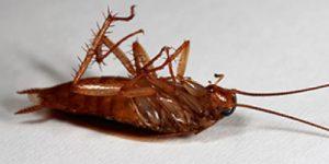 Nest Pest Control cockroach control washington dc 300x150 - Dedetizadora em Carapicuíba